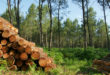 Holz als sichere Anlagemöglichkeit